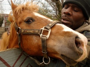 Tony takes Rose, the horse out in the corral in downtown Baltimore
